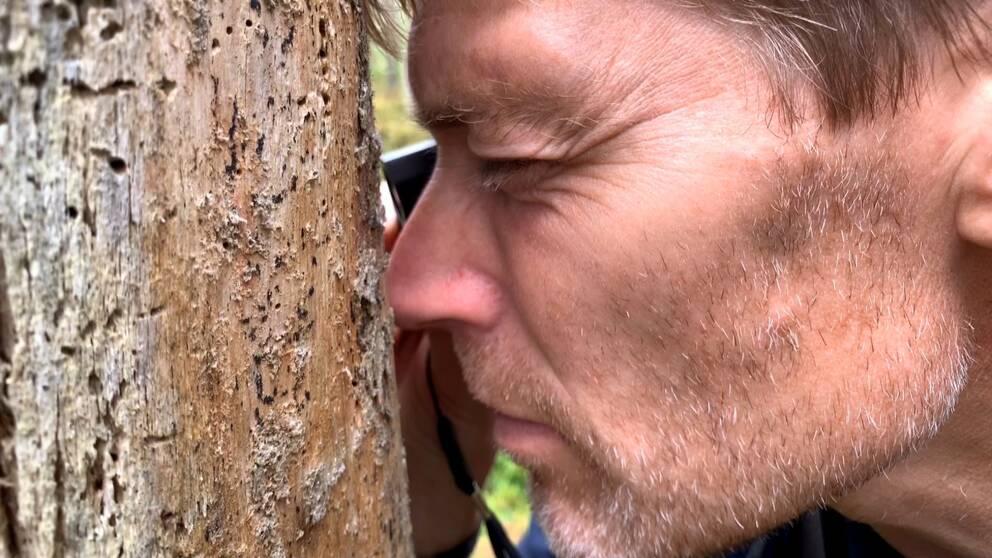 Så här säger inventerare Jan Rees om varför arbetet är viktigt och vad han letar efter ute i skogen.