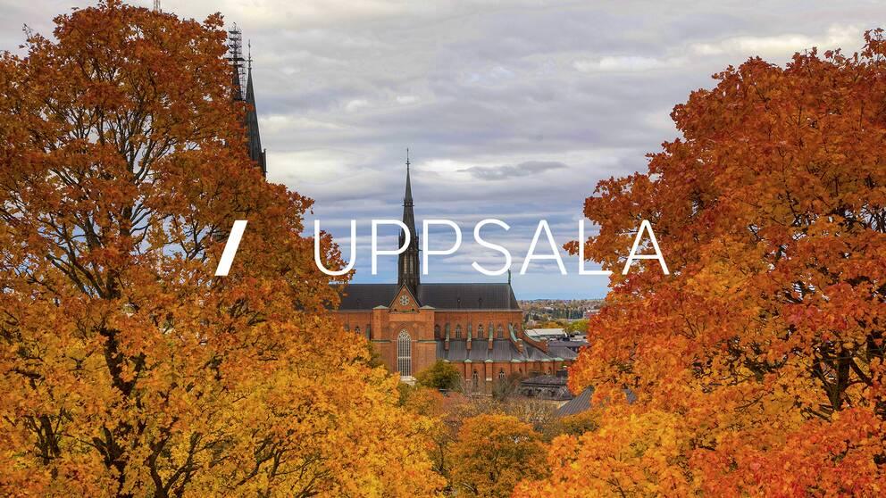 Lokala Nyheter Uppsala