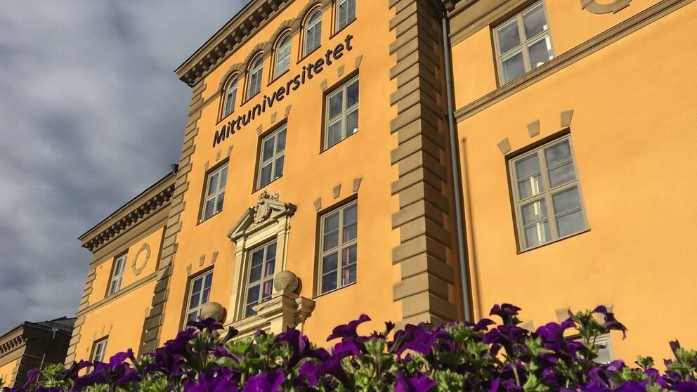 Bild på gul stenbyggnad med texten Mittuniversitetet. I förgrunden lila petunior.