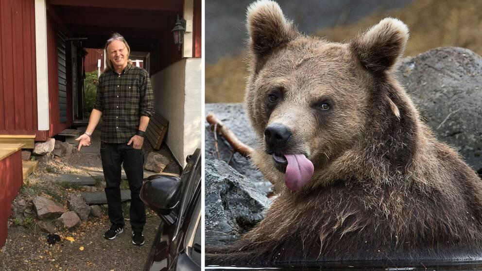 Bilden är ett collage. Vänster del: Ulf Gabrielsson pekar på björnspillning. Höger del: En björn ligger i vattnet.