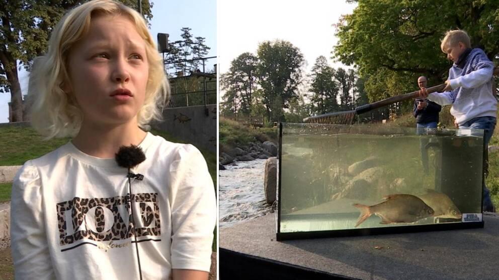 Olivia Danielsson. Brax i akvarium framför den nya bäcken.