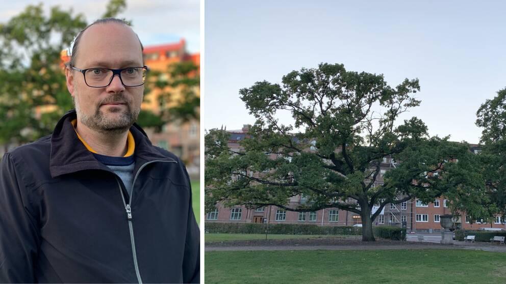 Till vänster Andréas Hall, utvecklingsingenjör på Helsinborgs stad. Till höger stort träd i Helsingborg.