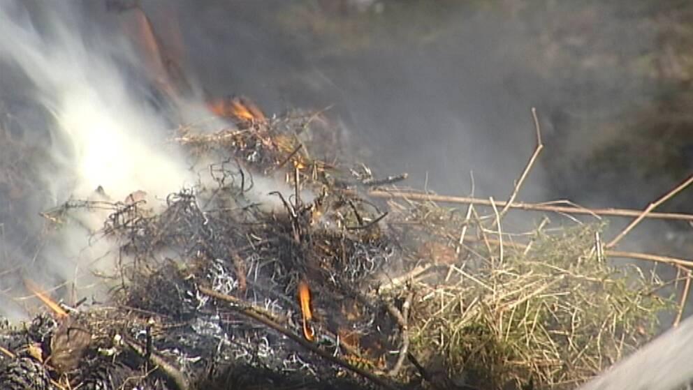 Arkivbild gräsbrand