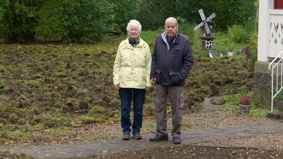 Allan och Greta Gustafssons står framför sin totalt uppbökade gräsmatta.