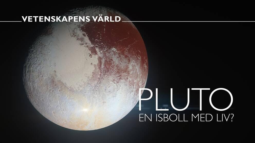 Vetenskapens värld: Pluto – en isboll med liv?