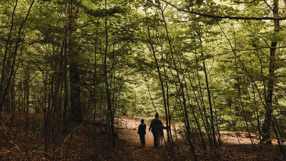 Två barn och en vuxen kvinna går genom en skogsomgärdad stig på Skåneleden vid Tingvalla.