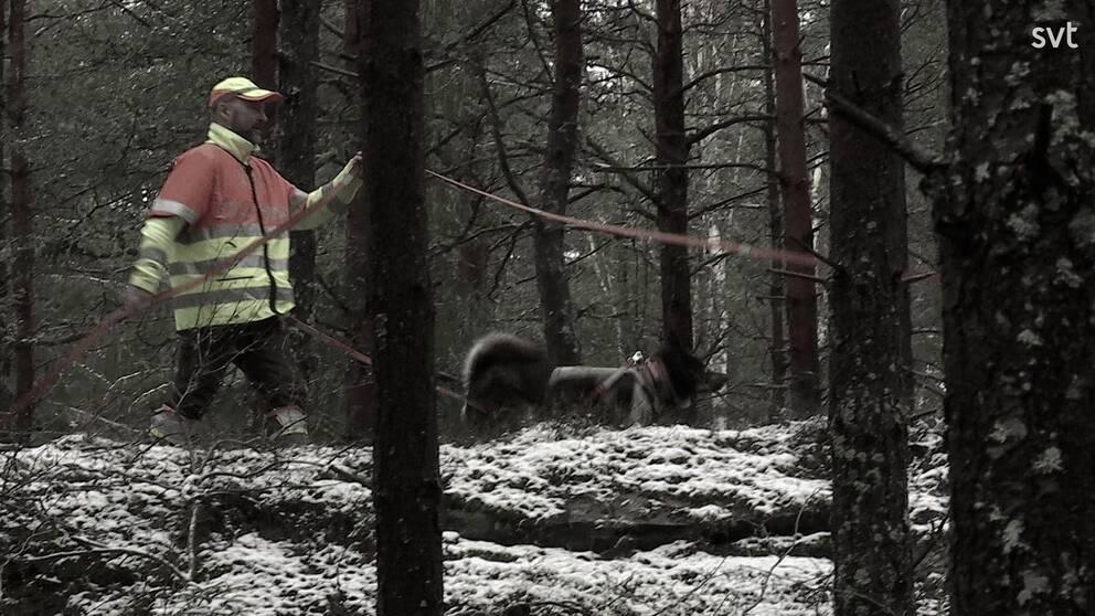 Bild på man med hundar i skogen