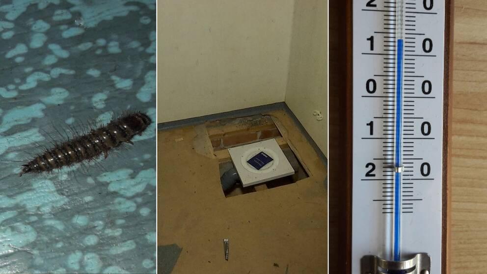 Bilder på undermåliga lägenheter och hus.