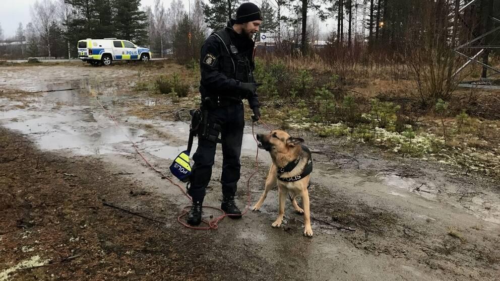 Polisens hundförare söker den försvunna kvinnan.