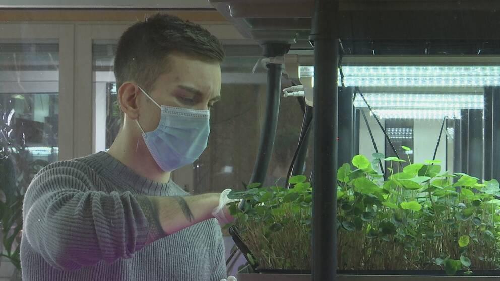 I ett övergivet laboratorium odlar Olof Guldbrandsson 600 kilo gröda per år till restauranger och kockar.