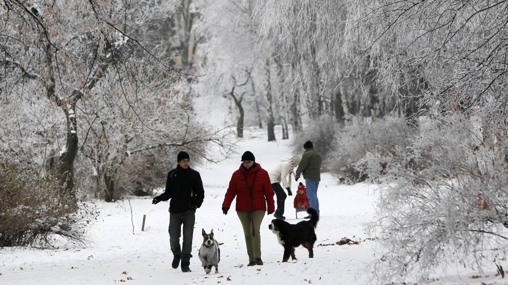 Flera personer som är ute på promenad i en park på vintern, snö på marken och träden, två hundar är med på promenaden.