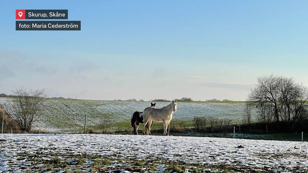 Skurup i Skåne den 9 januari.