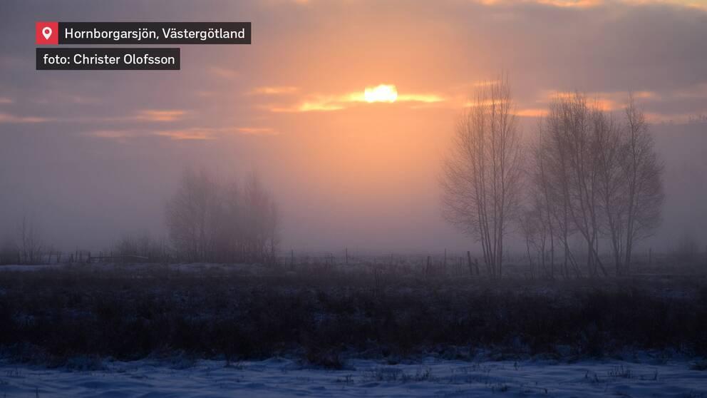 Hornborgarsjön i Västergötland den 9 januari.