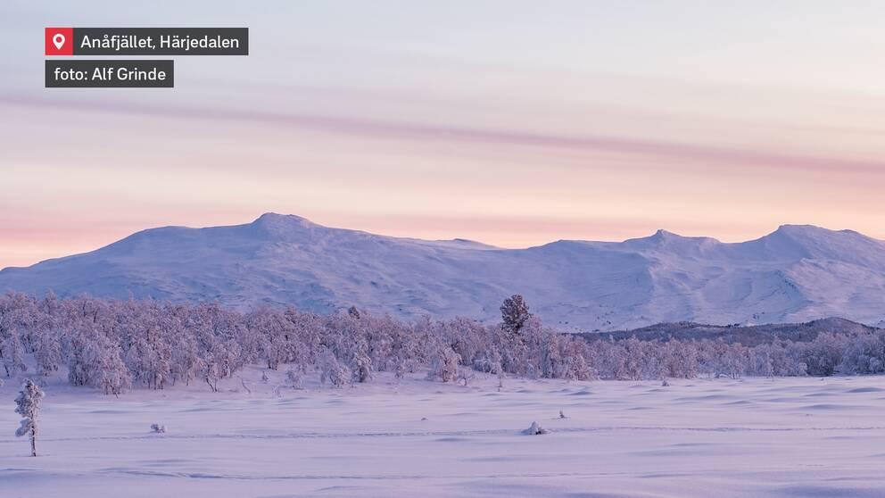 Anåfjället i västra Härjedalen den 10 januari.