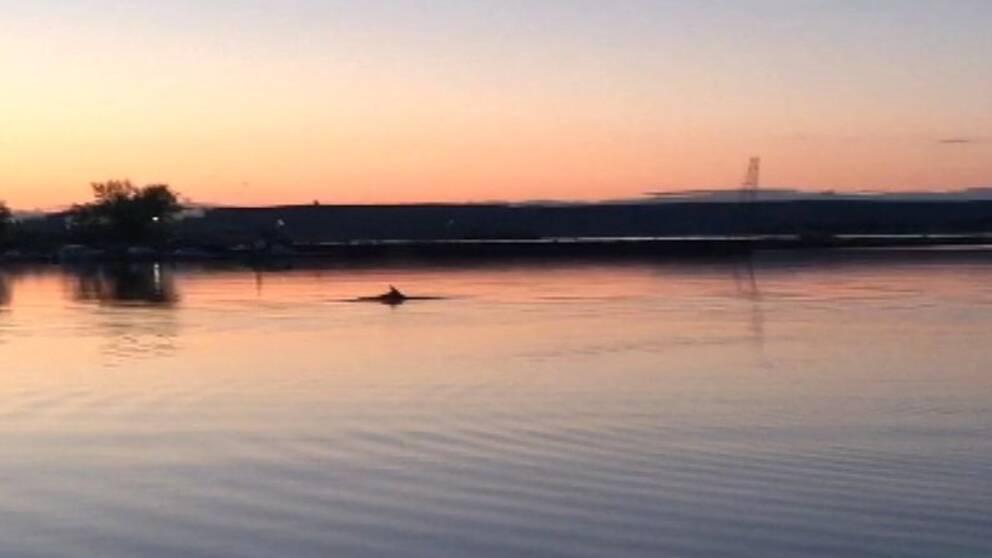 Delfin i Lindö småbåtshamn i Norrköping