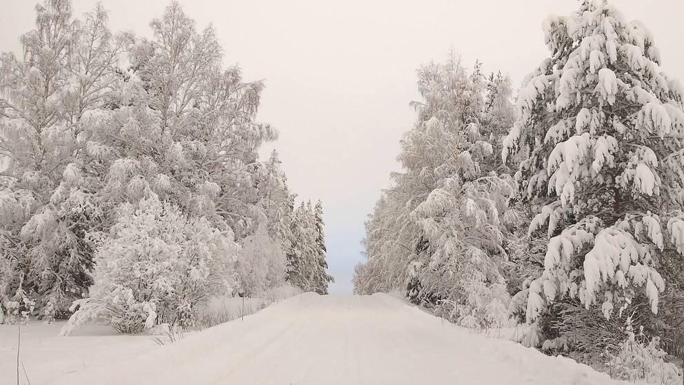 Vi har redan mycket snö, hur skall det bli när ovädret kommer, just nu halvklart och -7 grader i Mjövattnet Västerbotten.