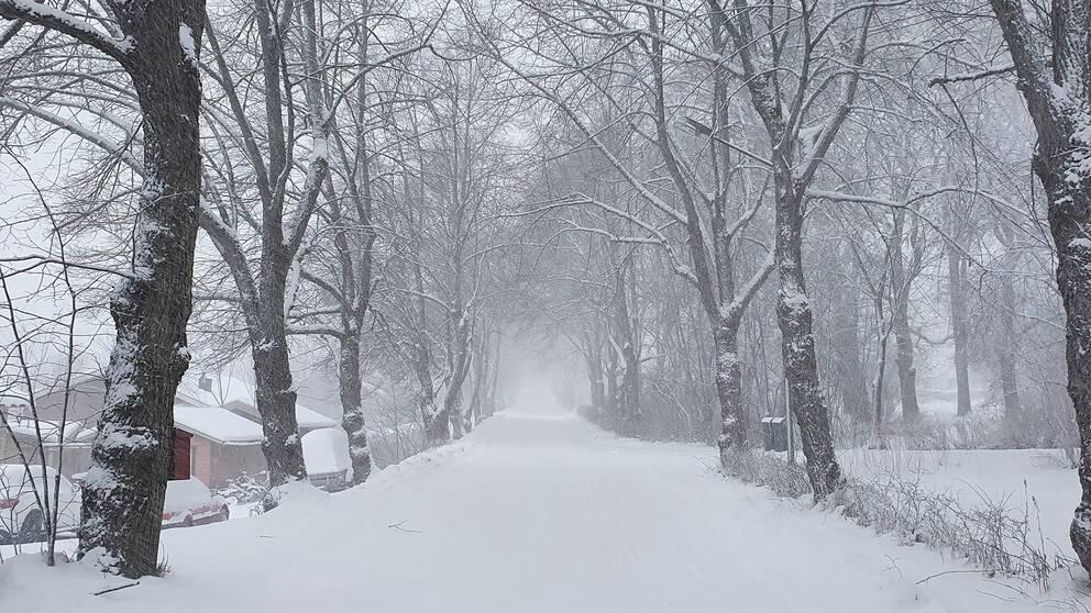 Snön yr i Sundsvall, Medelpad, 11 januari.