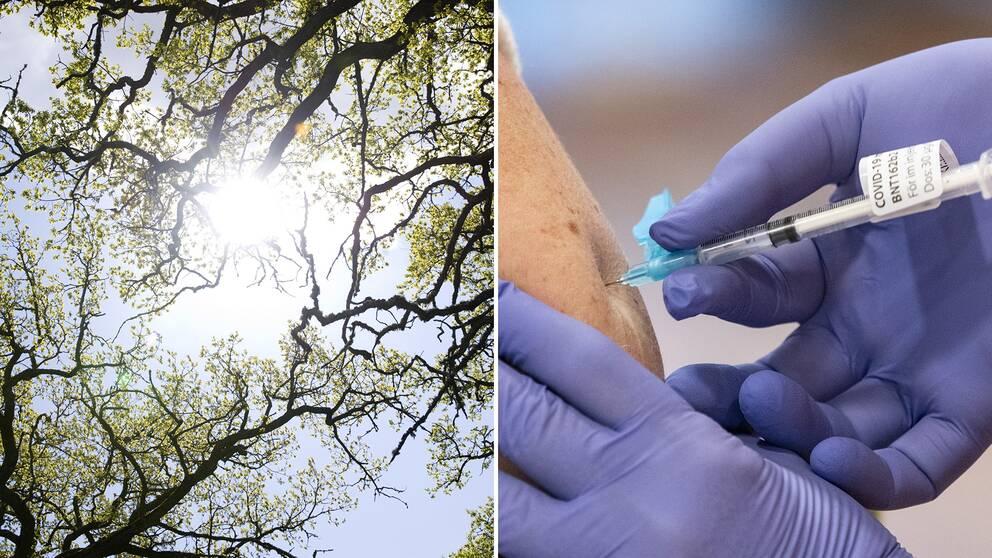 Vi går mot ljusare tider, skriver SVT:s vetenskapsreporter Therese Bergstedt. Bilden visar solljus, samt en person som vaccineras mot covid-19.