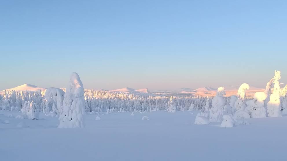 Borgafjäll på gränsen mellan Jämtland och Lappland.