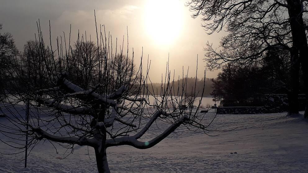 Vacker vintersol Sköndal i Stockholm Södermanland.