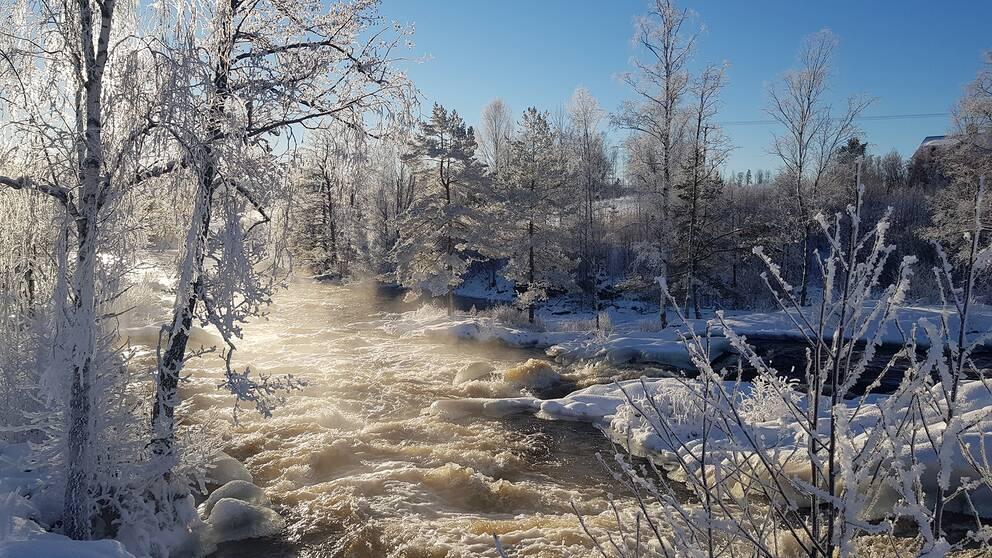 Forsen i Jösseälven lördag. Några km från norska gränsen. Häljeboda utanför Charlottenberg i Värmland.