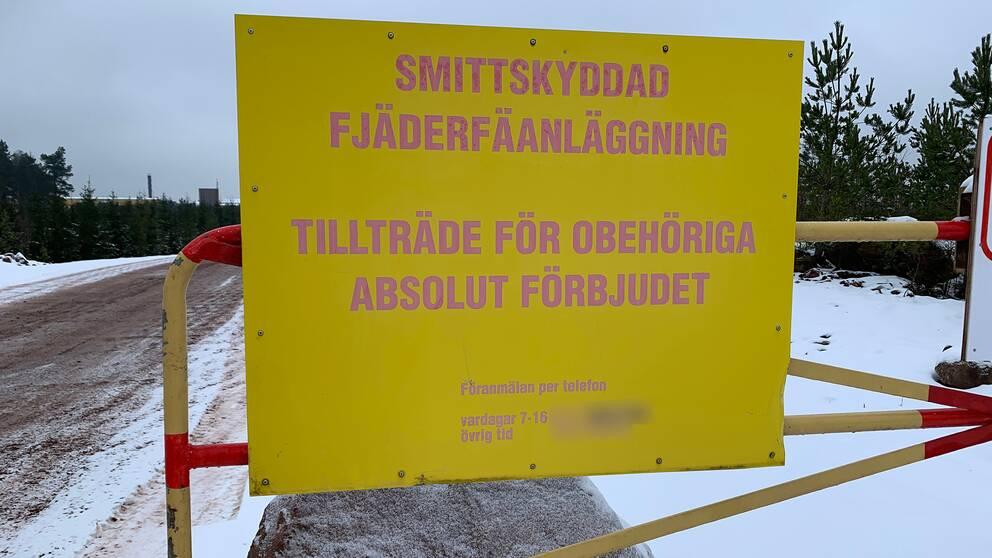 """Bilden föreställer en stor gulskylt med solblekta röda bokstäver. På skylten står det """"Smittskyddad fjäderfäanläggning, tillträde för obehöriga absolut förbjudet"""". Skylten hänger på ett rött och gult metallstaket. I bakgrunden syns en grusväg och snö i vägkanterna. Det skymtar även några granar och en gråmulen himmel."""