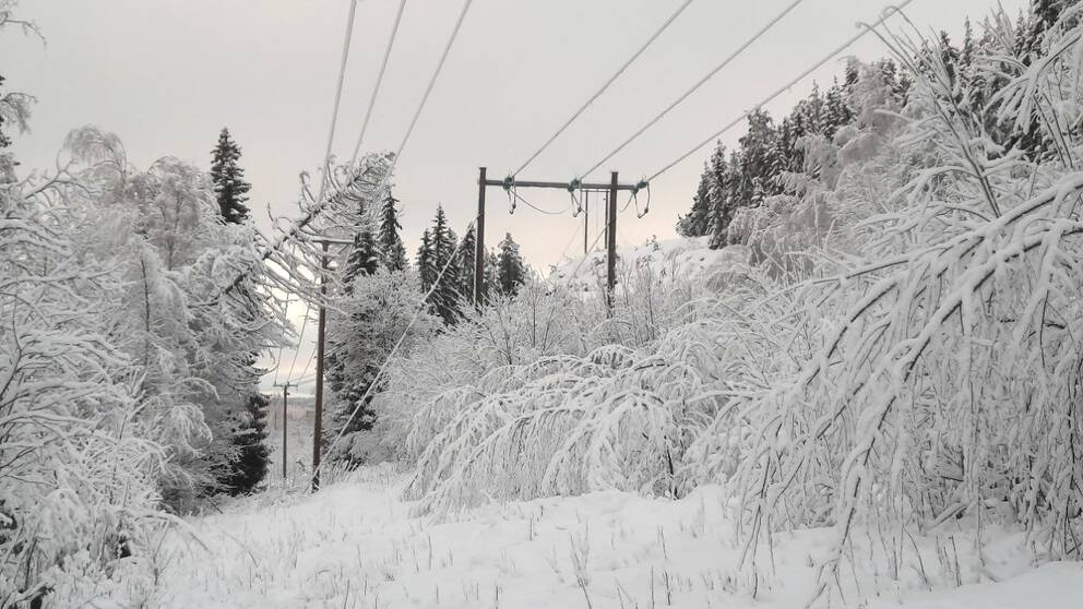 Bild på ett träd som ligger över en elledning