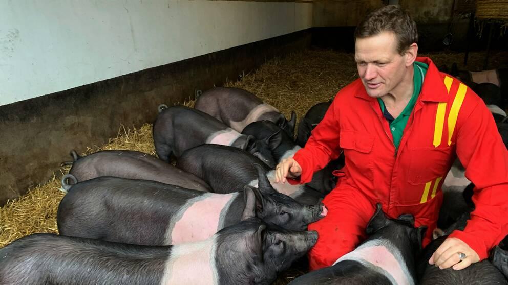 Erik Bengtsson bland grisarna