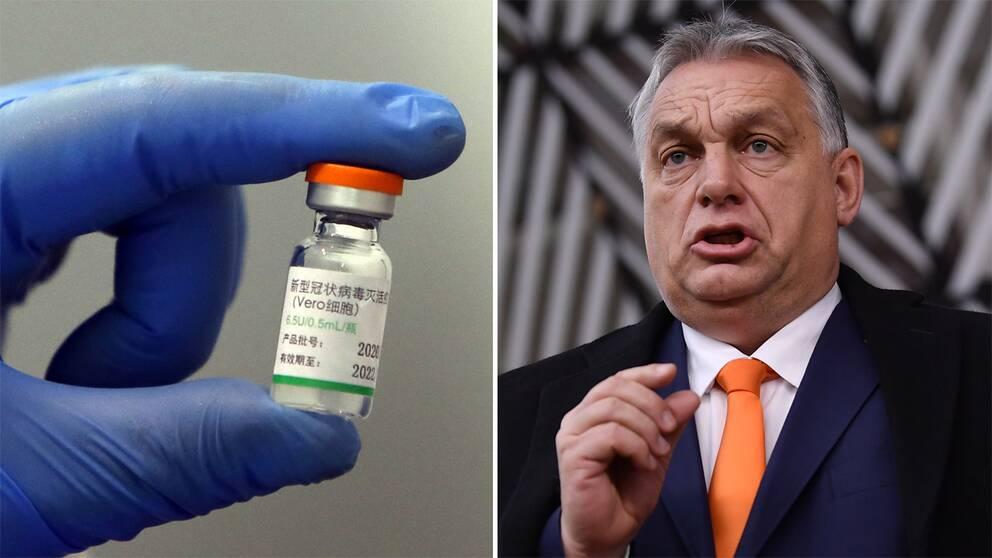 Flaska innehållandes Sinopharms vaccin/Viktor Orbán