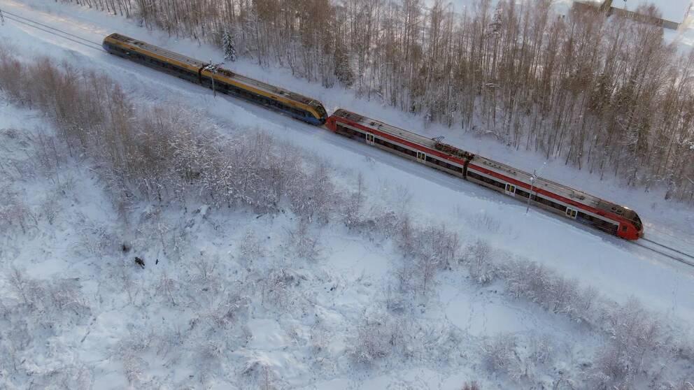 Tåg som passerar nära älgar på ett fält.