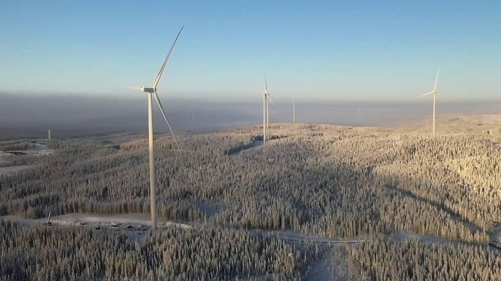 Vindkraftverk i skogslandskap
