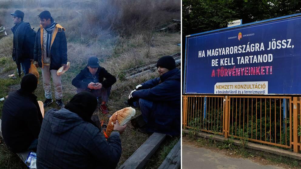"""Migranter värmer sig nära en övergiven fabrik i staden Subotica, nära gränsen mellan Serbien och Ungern. Till höger ett plakat som lyder: """"Om du kommer till Ungern, måste du respektera våra lagar!"""""""