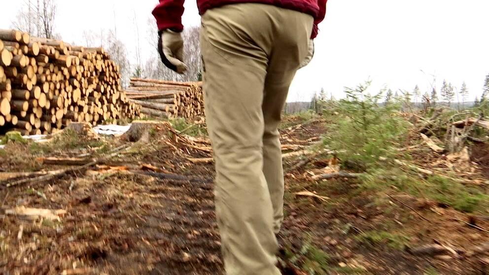 Förra året gjorde Skogsstyrelsen bara besök på sex procent av fallen av platserna före avverkning.