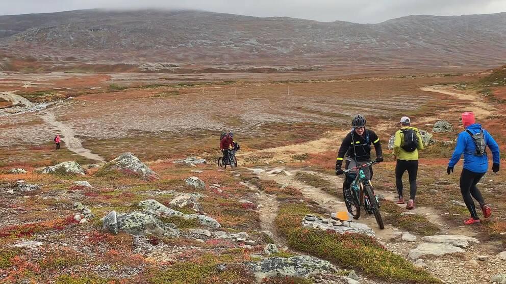 två löpare och två mountainbike-cyklister möts på en vandringsled på fjället, höstfärger i riset på marken
