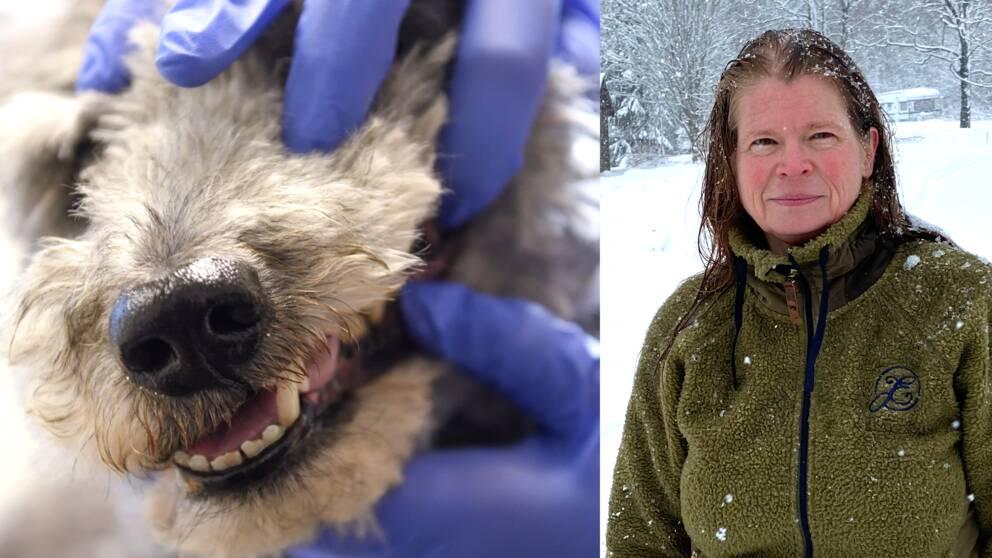 närbild på hundnos, undersökning av munnen, samt porträttbild på Helén löfblad – en medelålders kvinna utomhus i snöväder