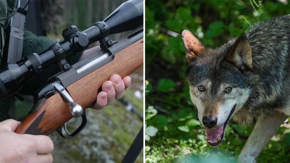 Montage jaktgevär och varg