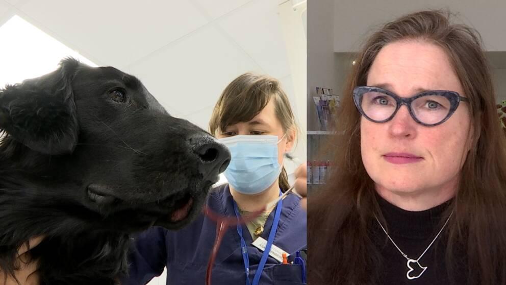 Maria Karlsson syns till höger i bild. Hon bär svart tröja och glasögon. Till vänster syns en hund som blir undersökt.