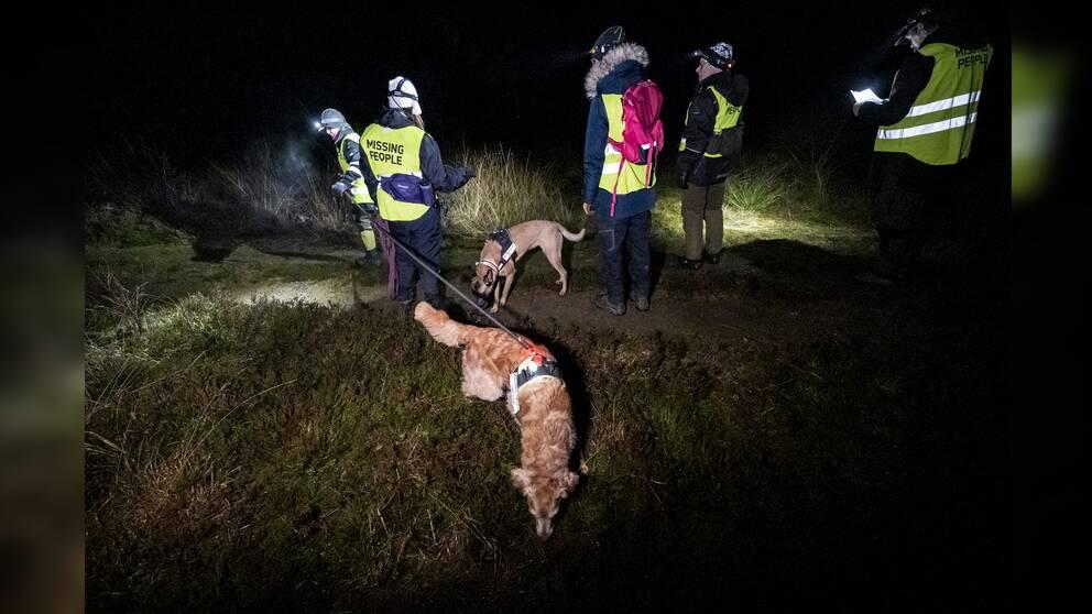 Människor i gula varselvästar och pannlampor står utomhus på en gräsplätt. Två hundar nosar på marken.