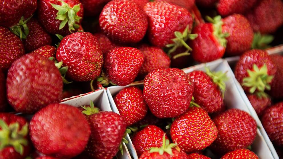 plocka jordgubbar skåne