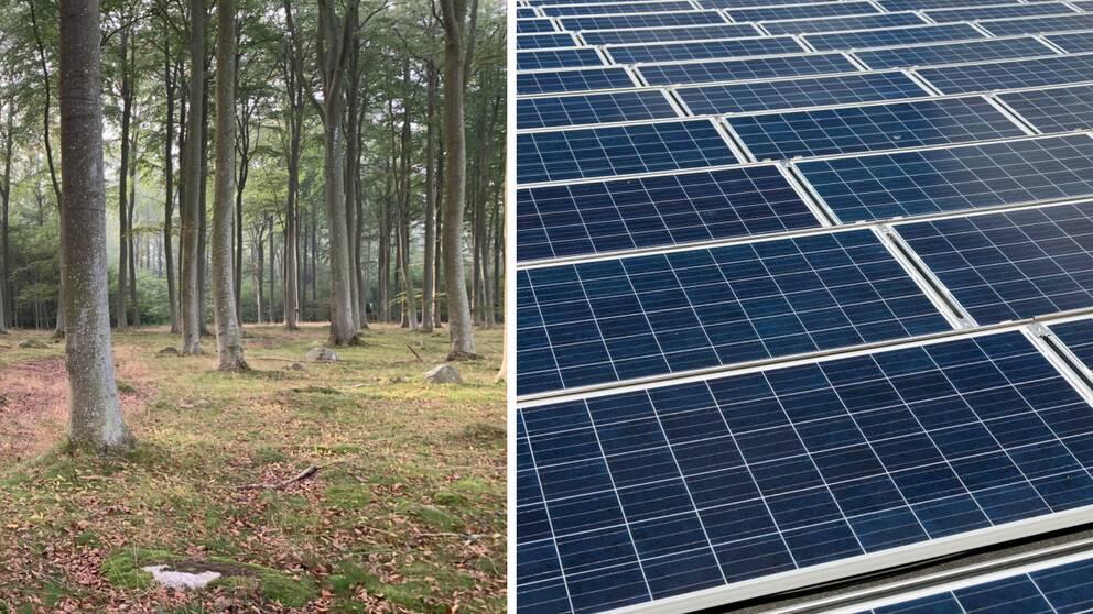 Fotomontage mellan en bild på skog och solceller