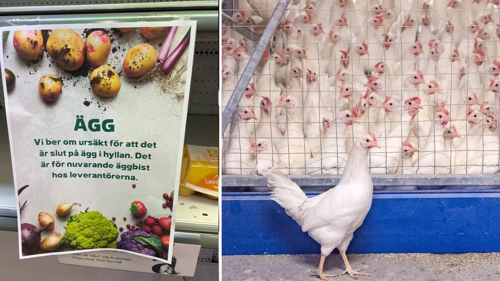 Luftburen fågelinfluensa kan göra det glest mellan de svenska äggpaketen i mathyllorna.