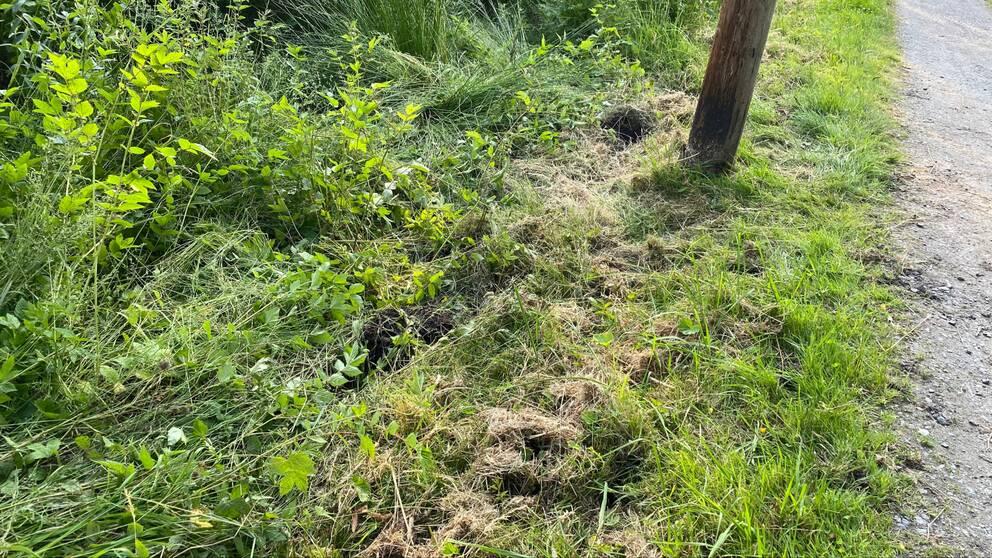 Uppriven mark där älgen gjort utfall mot pojken, som sökte skydd bakom stolpen.