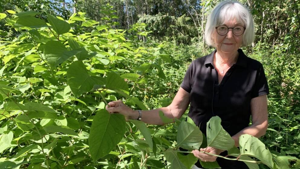 äldre kvinna visar blad på stor buske
