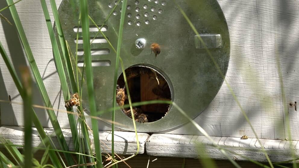 Bin utanför en bikupa.