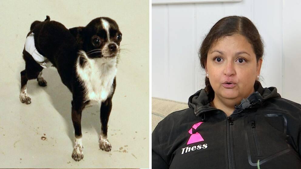 Bild på en liten hund till vänster. Hunddagisföreståndaren Therese Welander till höger.