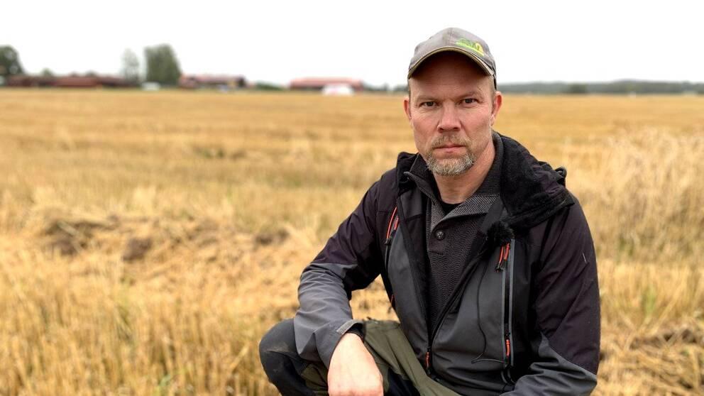Bonden Joakim Borgs hukar sig ned på sin veteåker i Gustafs.