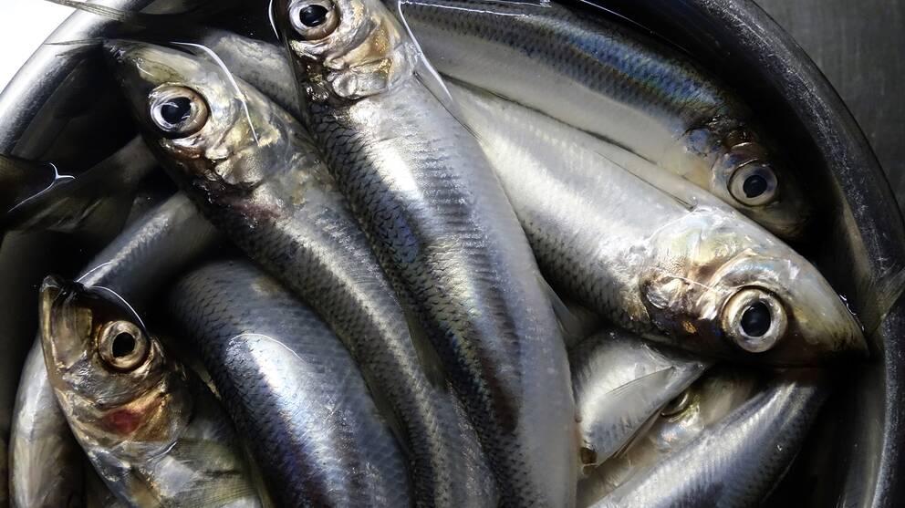 fiskar i en bunke