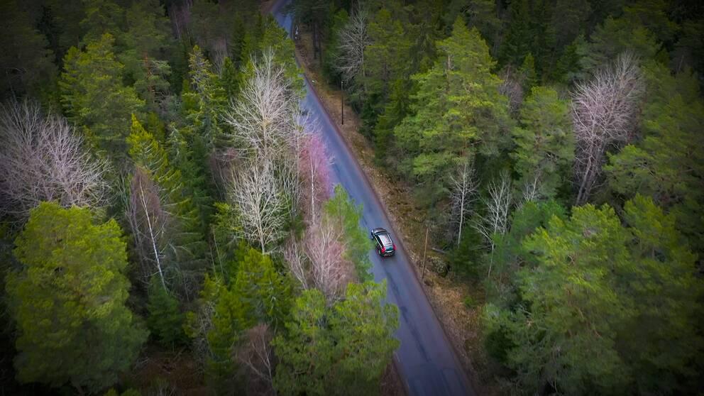 Totalt uppskattas den svenska skogen årligen dammsuga luften på 120 miljoner ton koldioxid.