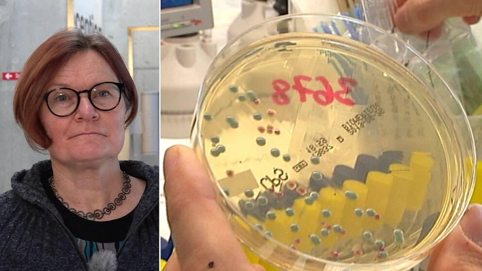 Delad bild. Till vänster kvinna med rödaktigt hår i pagefrisyr och svartbågade runda glasögon. Till höger en petriskål med bakterieodling