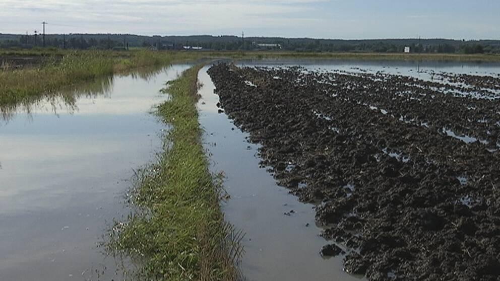 Ännu den 9 september låg mycket åkermark under vatten kring Hallsberg.